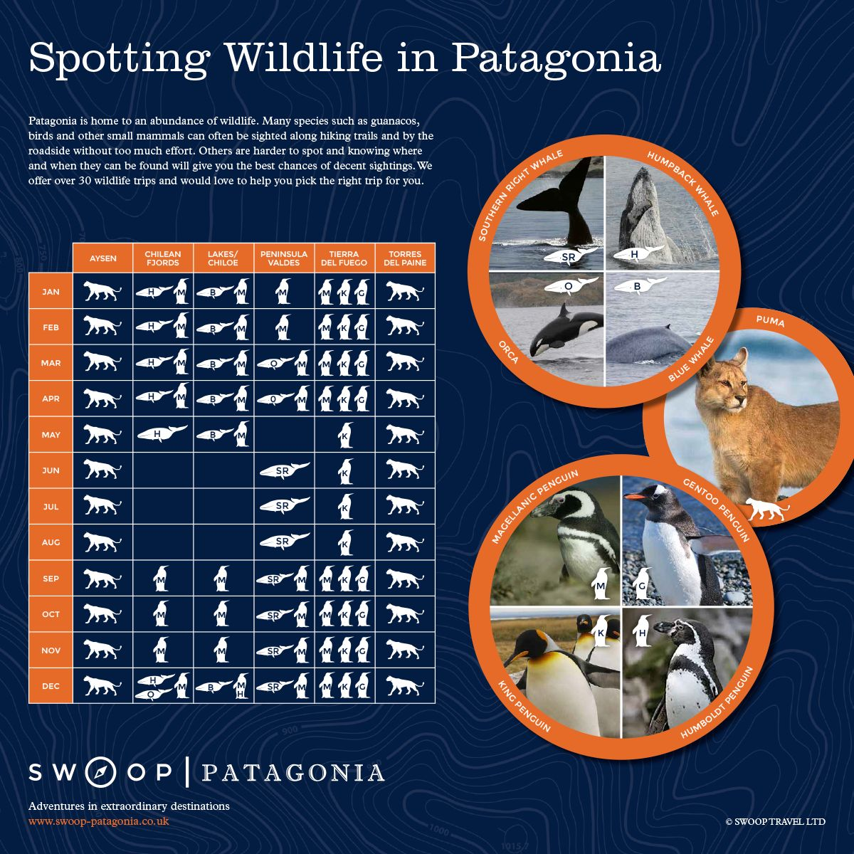 Patagonia Wildlife Guide