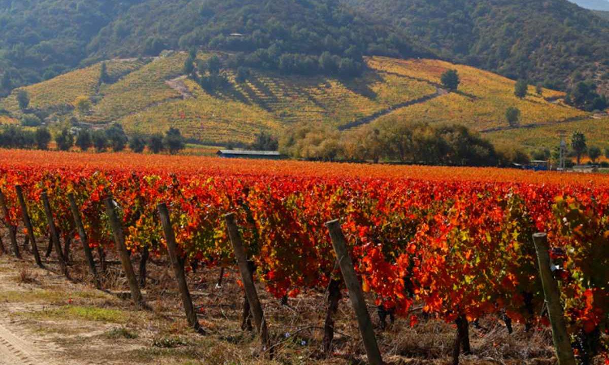 Montes-Winery