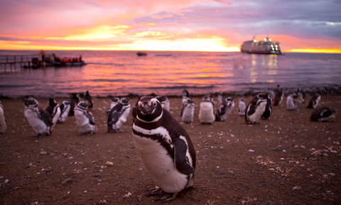 Penguins in Patagonia