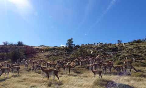 Animals of Patagonia