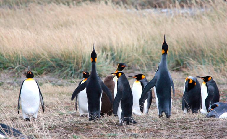 Penguins Rey - SWX (CRUC) p-p