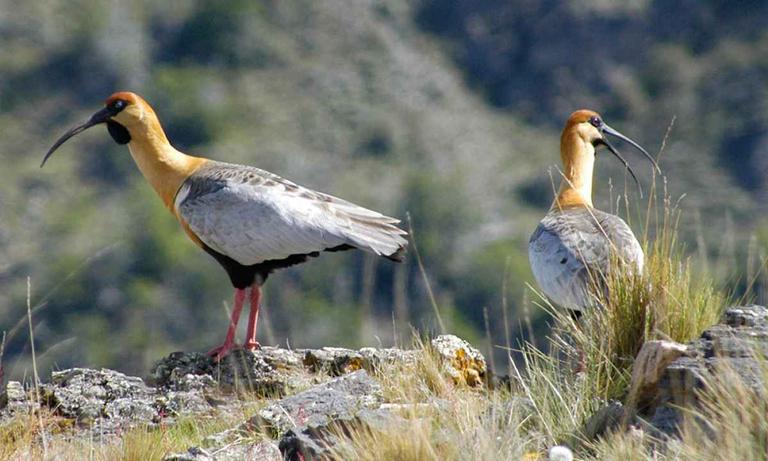Patagonia-Park-Bird-Watching