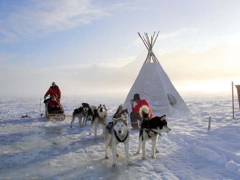 Huskys in Tierra del Fuego - HEX