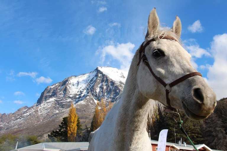 Hotel las Torres horse