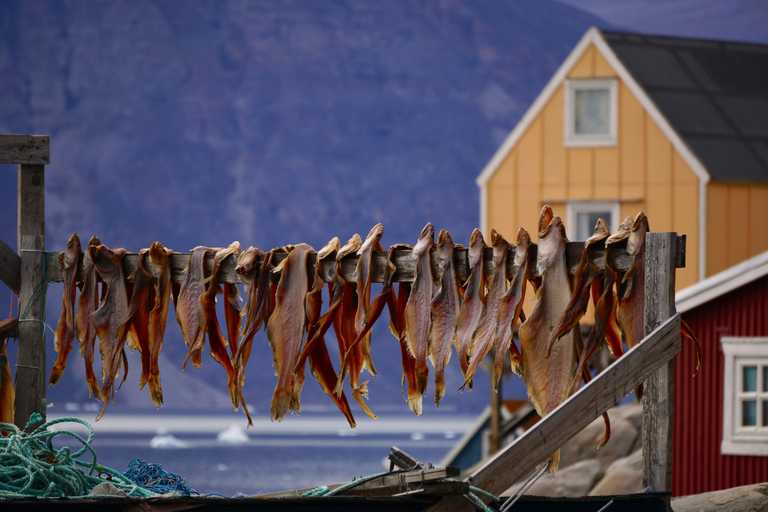 Greenland-hanging-fish