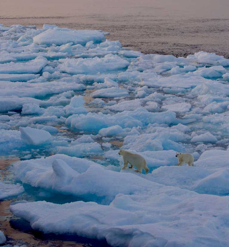 polar-bear-crop