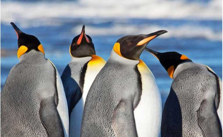 Pumas Penguins Whales - 1 FSE