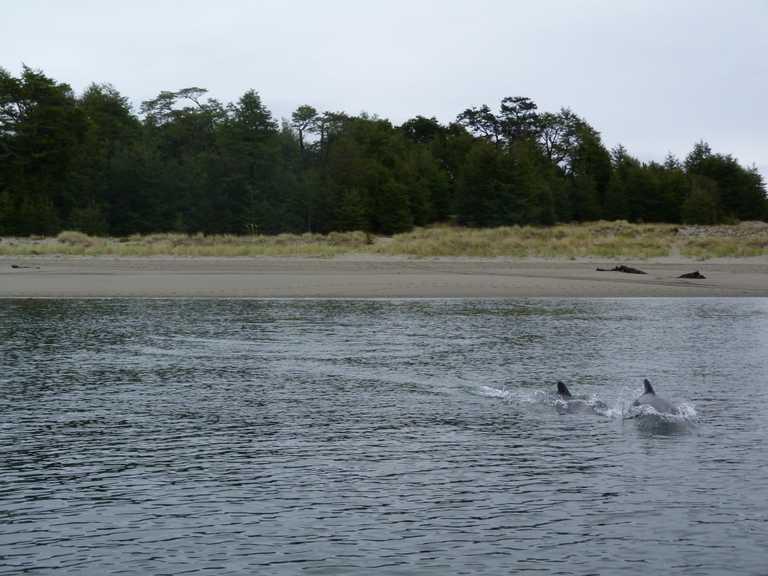 Raul Marin Balmaceda dolphins