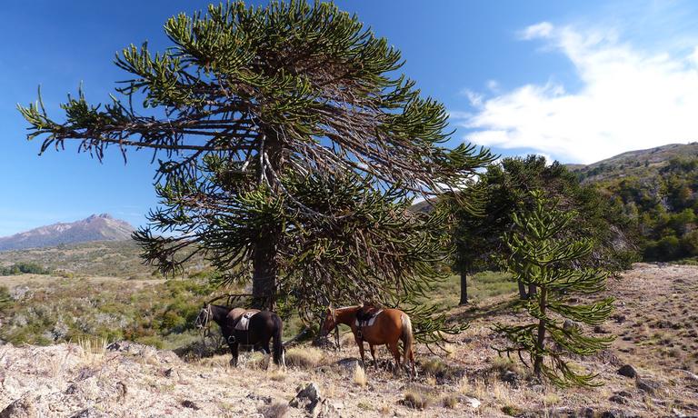 Roaming Horse Ride Adventure