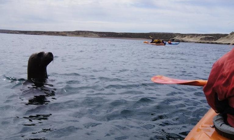 1 Day Valdes Wildlife Kayak