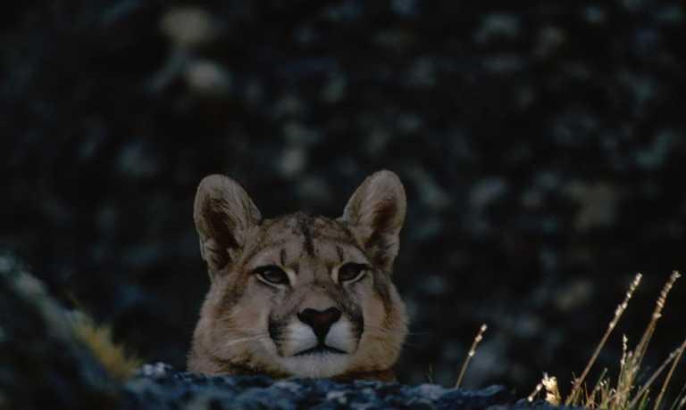 Puma Photo Safari
