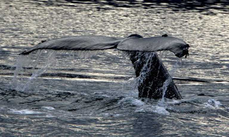 Humpback Whale Watching Adventure