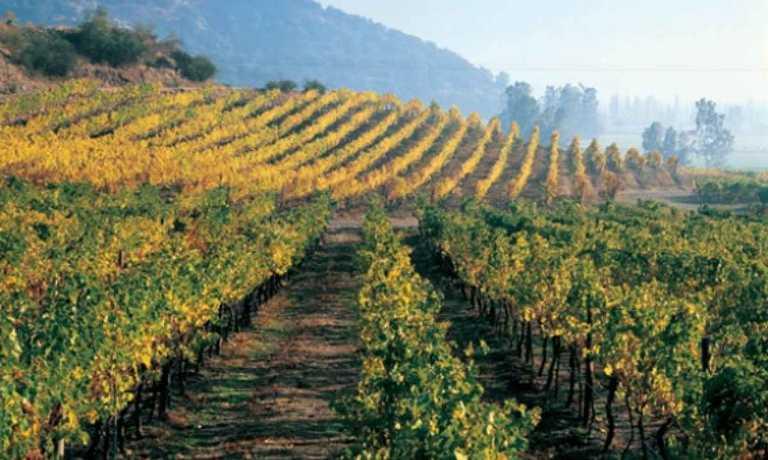 Santiago City and Vineyards