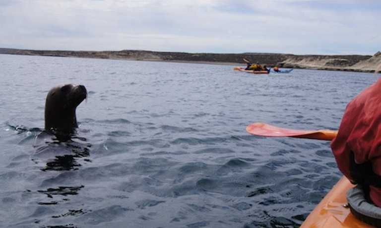 1 Day Valdes Wildlife Kayak