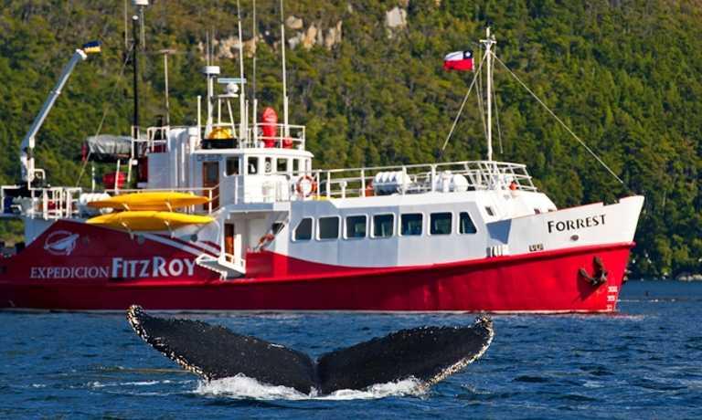 Humpback Whales & D'Agostini Sound